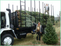 Our 20 ft Delivery Truck. Can deliver up to 300 trees.